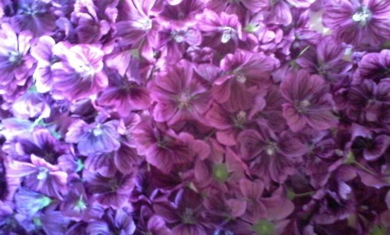 Passeggiata tra erbe aromatiche ed erbe officinali